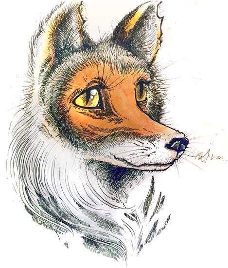 Fox - Pen and ink