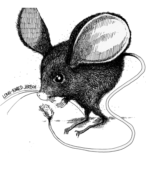 Jerboa - Pen and ink