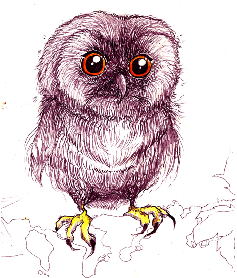 Owl - Biro and Pen