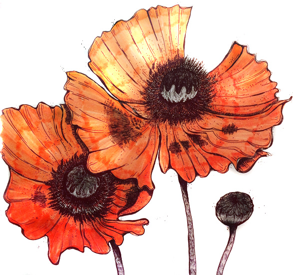 Poppy - Pen and ink