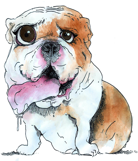 Bulldog - Watercolour
