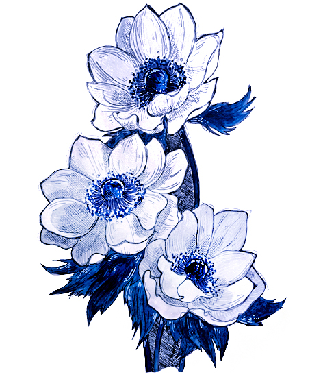 Anemone - Acrylics and ink