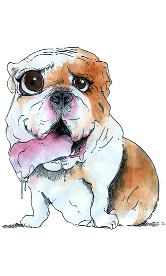 Bulldog -